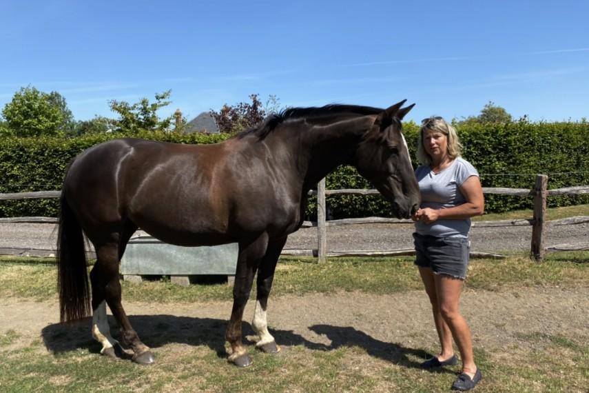milan-horse-harriet