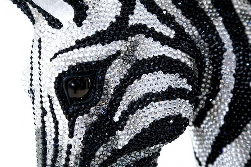 zebra-19-min