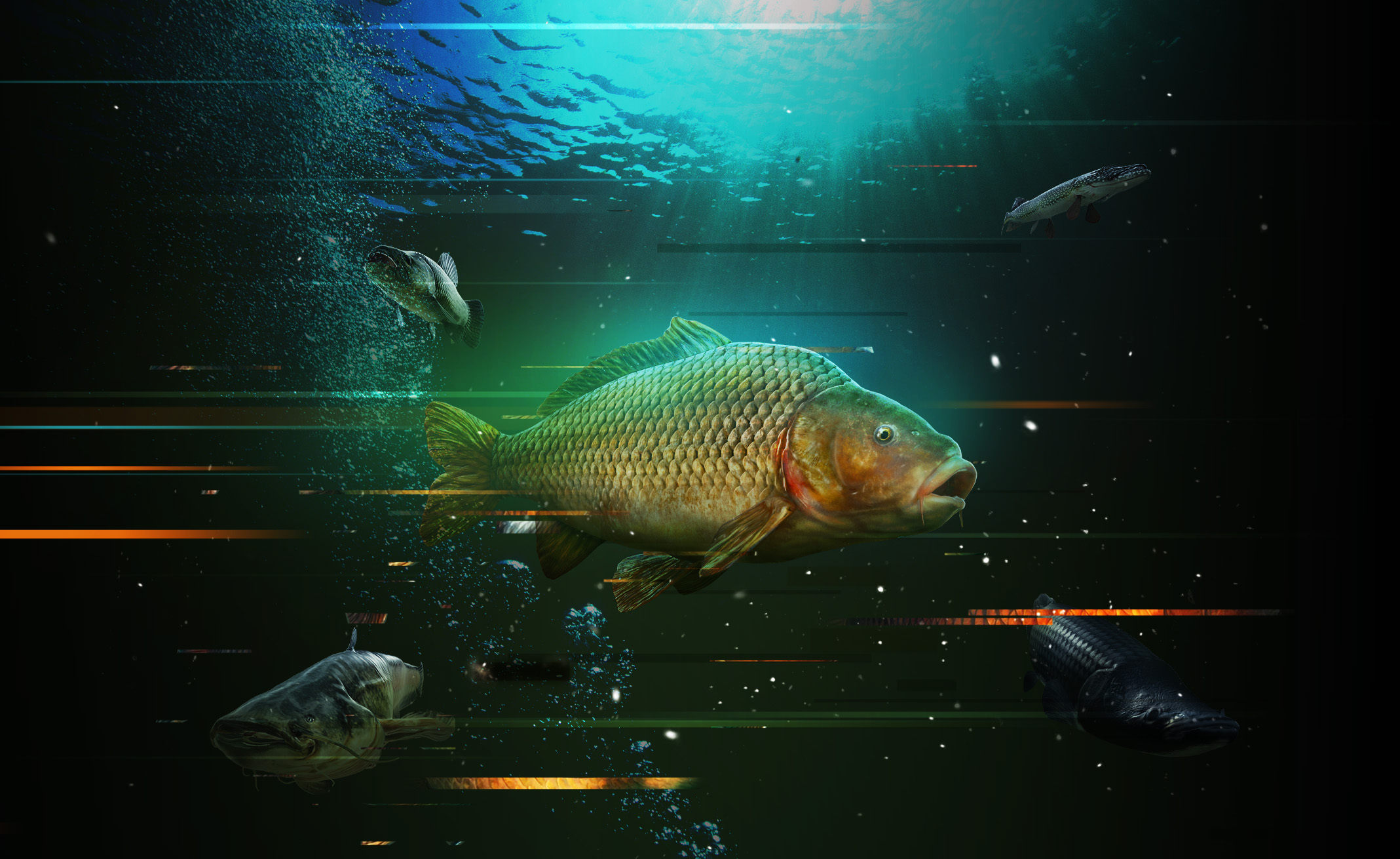 divide_fish_v6_nologo